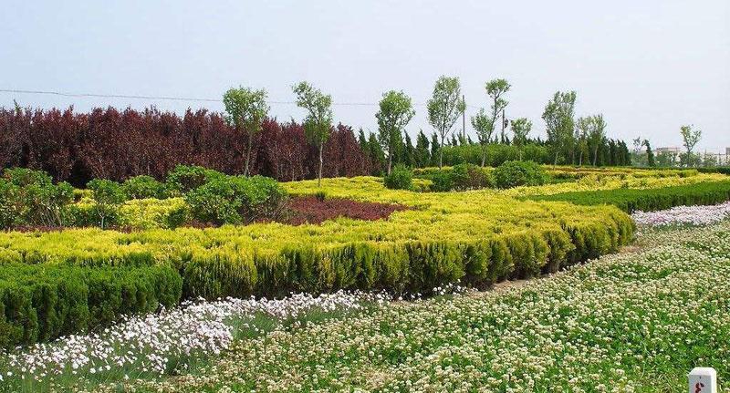 美丽乡村绿化工程