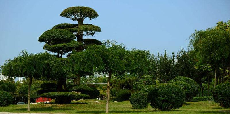 景区绿化工程